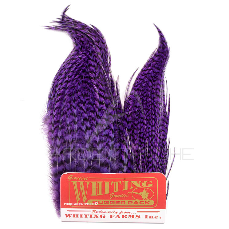 Whiting Bugger Pack Grizzly teint purple