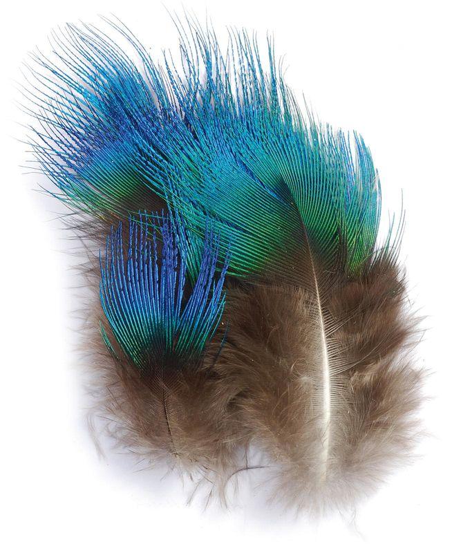 paon plumes de corps bleu paon les plumes montage des. Black Bedroom Furniture Sets. Home Design Ideas